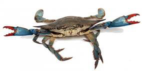 Photo of Crab